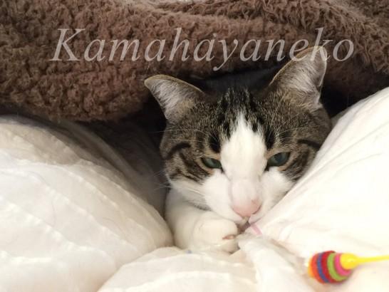 カバーの下の猫9