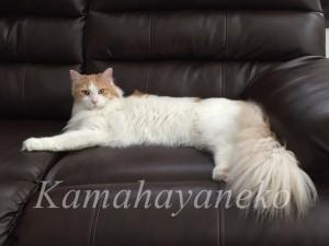 ソファの猫2
