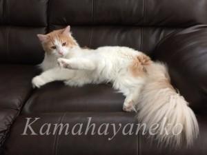 ソファの猫3