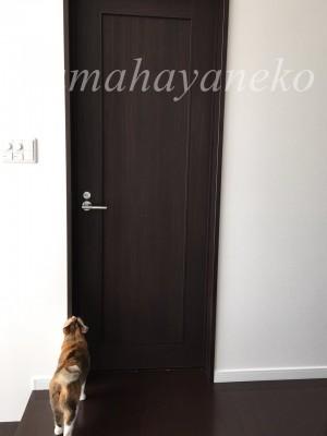 ドアメイ1