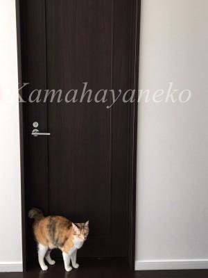 ドアメイ2