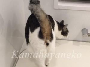 バスルームの猫3