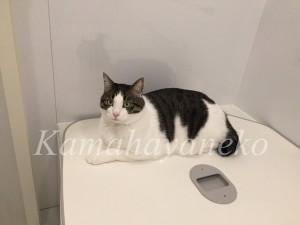 バスルームの猫8