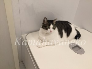 バスルームの猫9