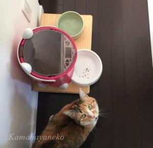 おねだり猫2