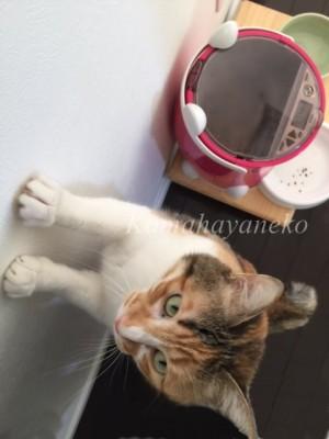 おねだり猫4