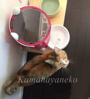 おねだり猫6