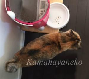 おねだり猫7