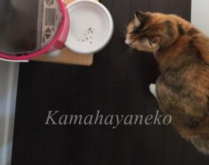 おねだり猫8