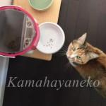 おねだり猫9