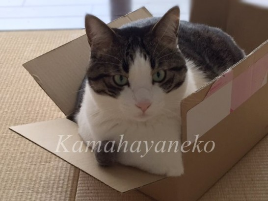 ダンボール猫10