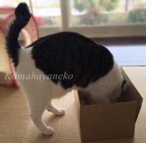 ダンボール猫3