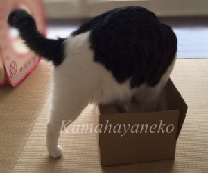 ダンボール猫5