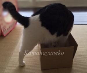 ダンボール猫6