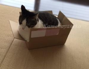 ダンボール猫9