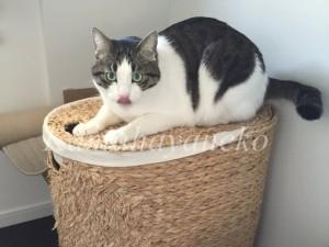 ランドリーバスケット猫1