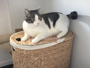 ランドリーバスケット猫2
