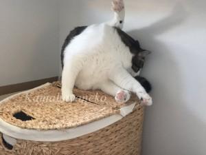ランドリーバスケット猫7