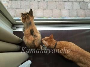 外を見る猫3