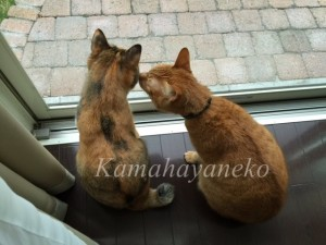 外を見る猫5