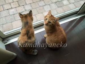 外を見る猫9