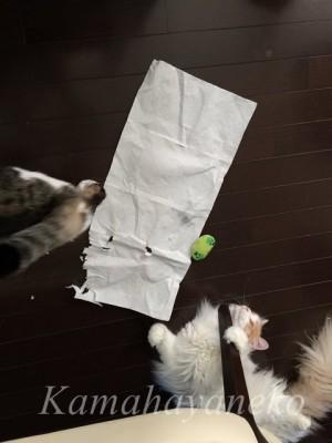 猫わきゃわきゃ11