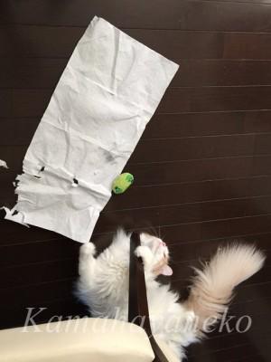 猫わきゃわきゃ12