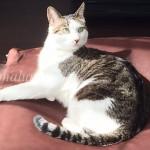 猫ソファ3