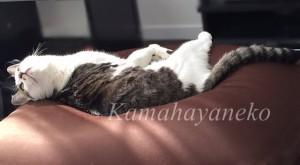 猫ソファ5
