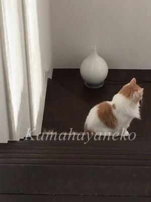 階段の猫5