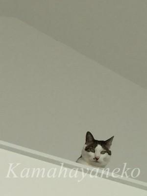 2階から猫1