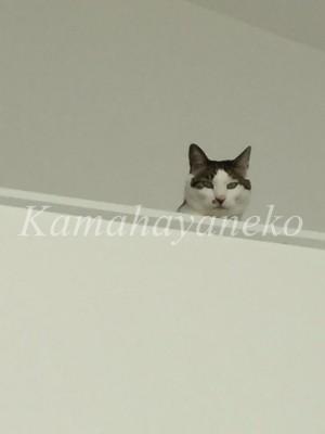 2階から猫2