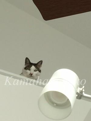 2階から猫3