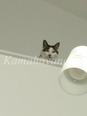 2階から猫4