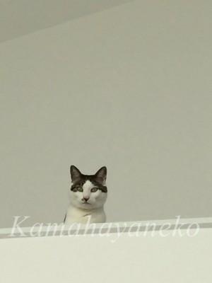 2階から猫5