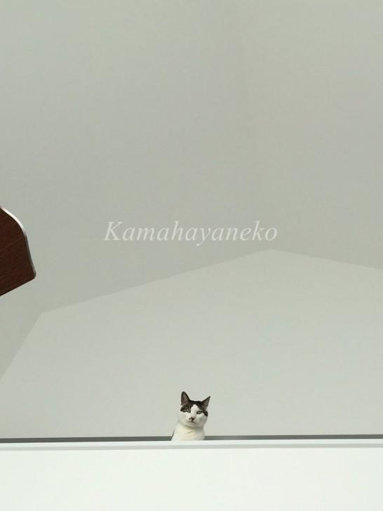 2階から猫6