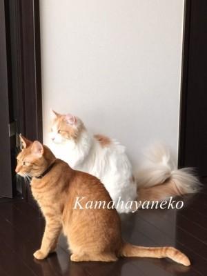 2匹の猫2