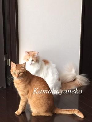 2匹の猫3