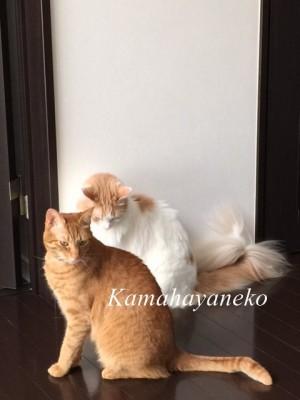 2匹の猫4