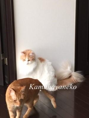 2匹の猫5