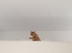 2階から猫パート210