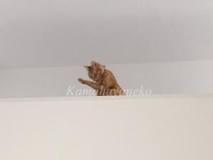 2階から猫パート23