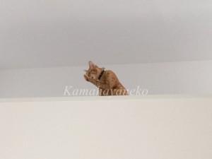 2階から猫パート24