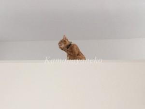 2階から猫パート25