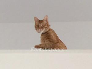 2階から猫パート26