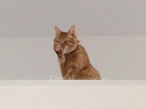 2階から猫パート27