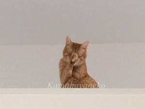 2階から猫パート28