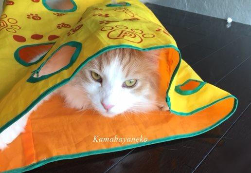カシャカシャ猫10