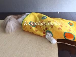 カシャカシャ猫4