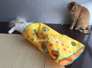 カシャカシャ猫5